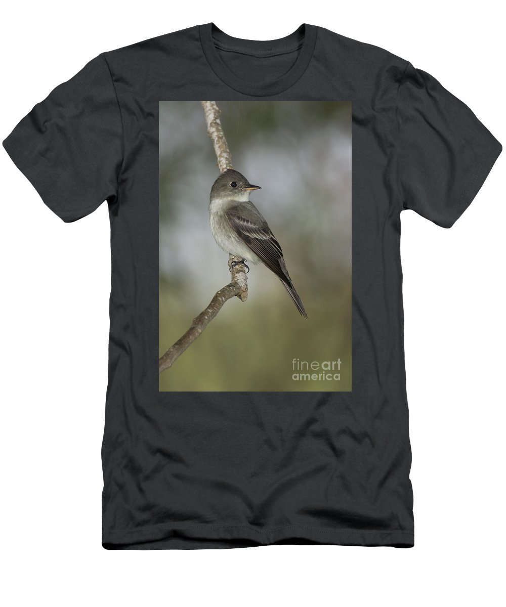Eastern Wood-pewee Men's T-Shirt (Athletic Fit) featuring the photograph Eastern Wood-pewee by Anthony Mercieca