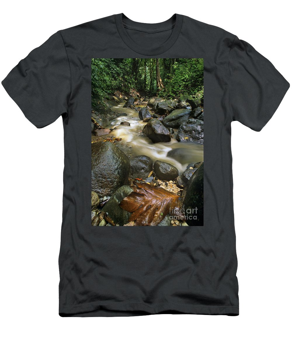 Caribbean Men's T-Shirt (Athletic Fit) featuring the photograph Edmond Forest Reserve On Saint Lucia by Dave Welling
