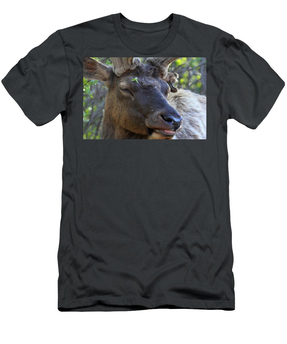 Elk Men's T-Shirt (Athletic Fit) featuring the photograph Elk Chuckle by Shane Bechler
