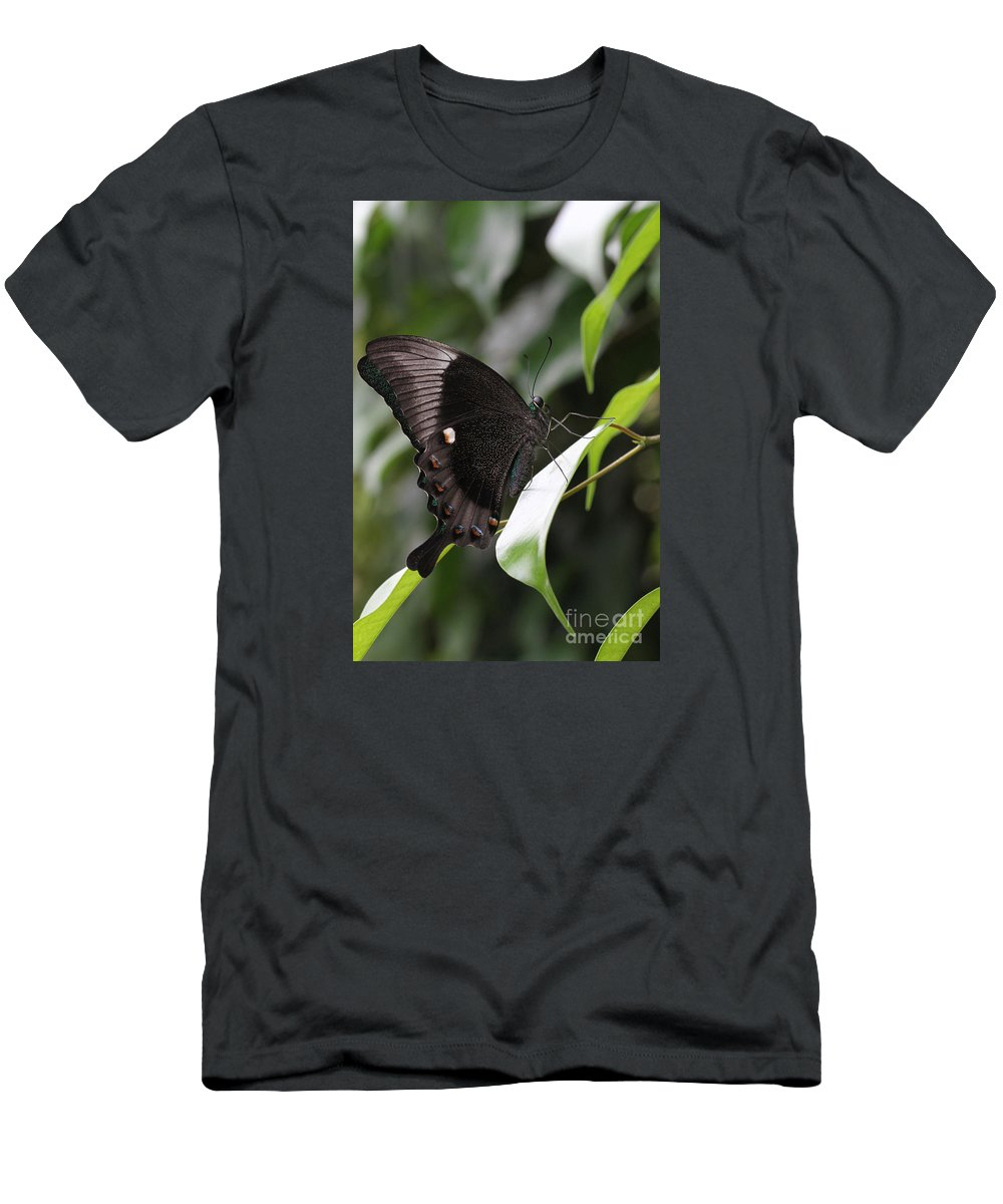 Butterfly Men's T-Shirt (Athletic Fit) featuring the photograph Emerald Peacock Swallowtail Butterfly #6 by Judy Whitton