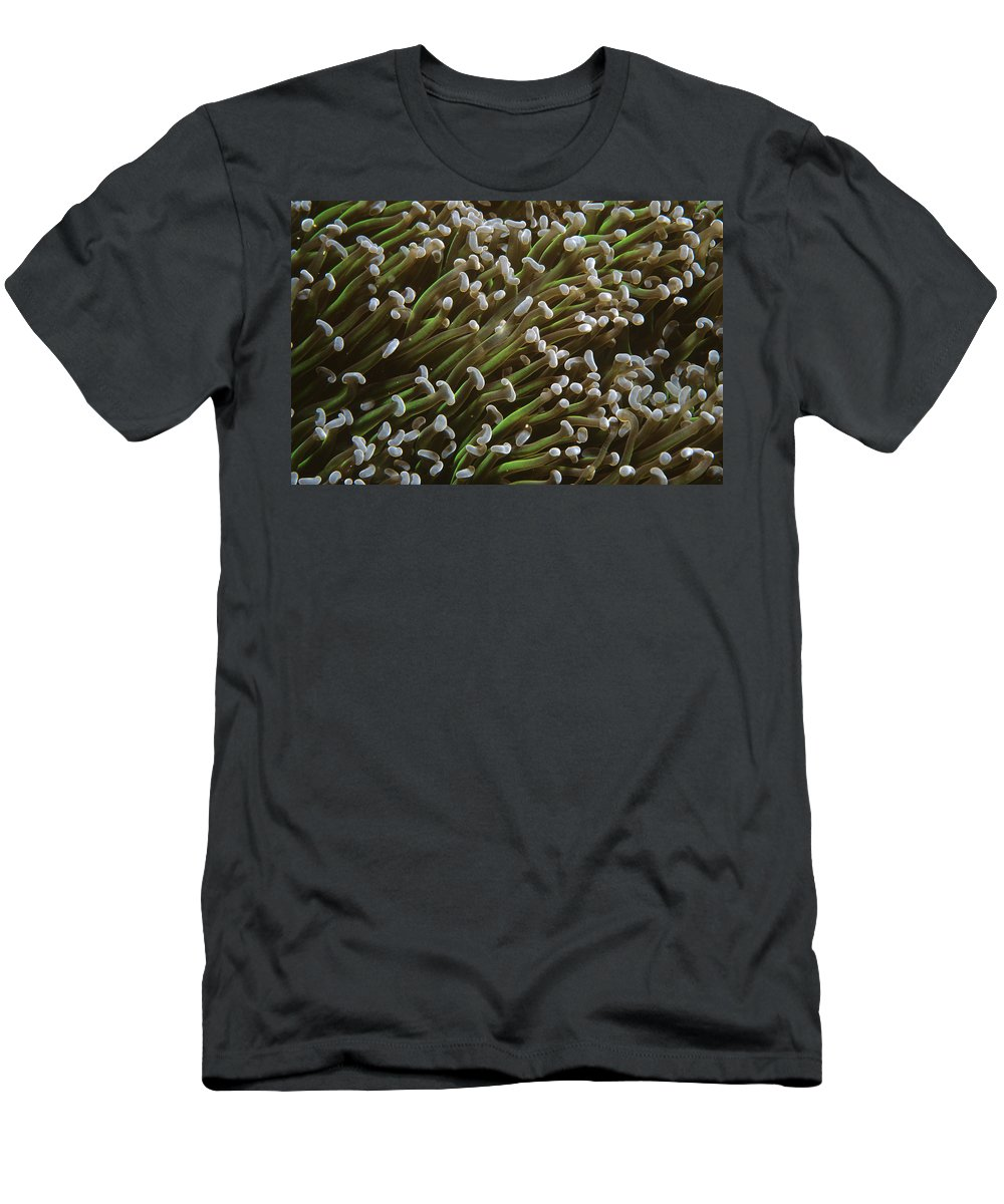 Feb0514 Men's T-Shirt (Athletic Fit) featuring the photograph Euphyllia Coral Polyps Australia by Becca Saunders