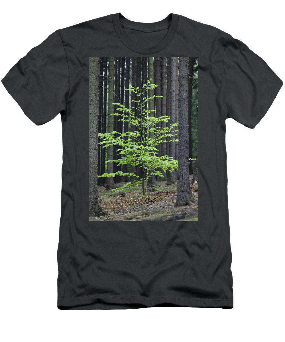 Feb0514 Men's T-Shirt (Athletic Fit) featuring the photograph European Beech Tree In Noway Spruce by Duncan Usher