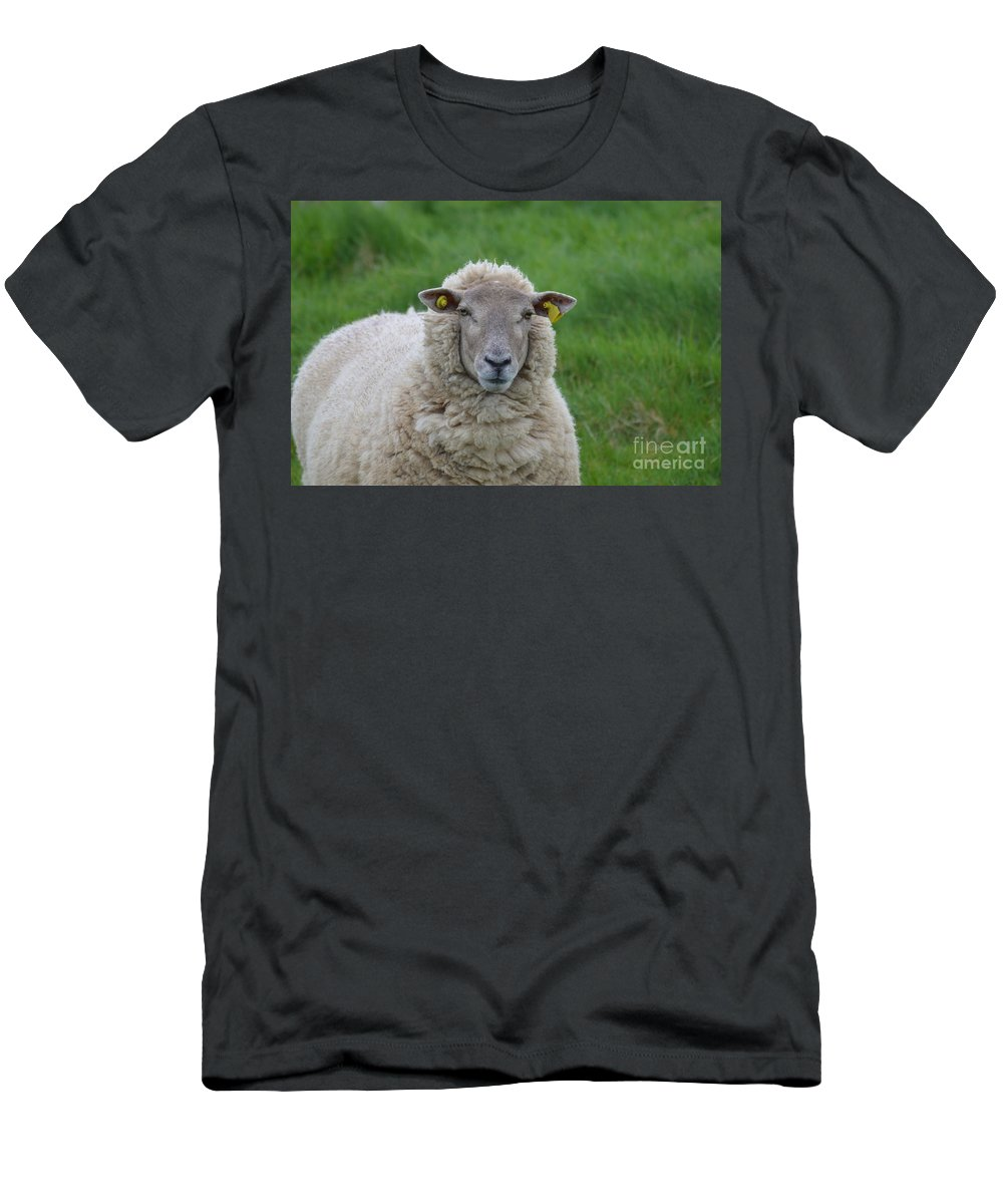 Sheep Men's T-Shirt (Athletic Fit) featuring the photograph Ewe by DejaVu Designs