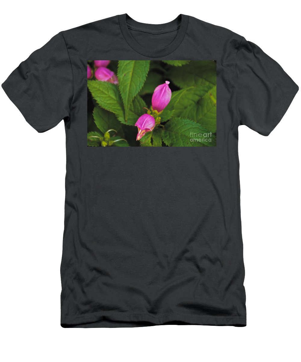 Pink Men's T-Shirt (Athletic Fit) featuring the photograph Fall Buds by William Norton