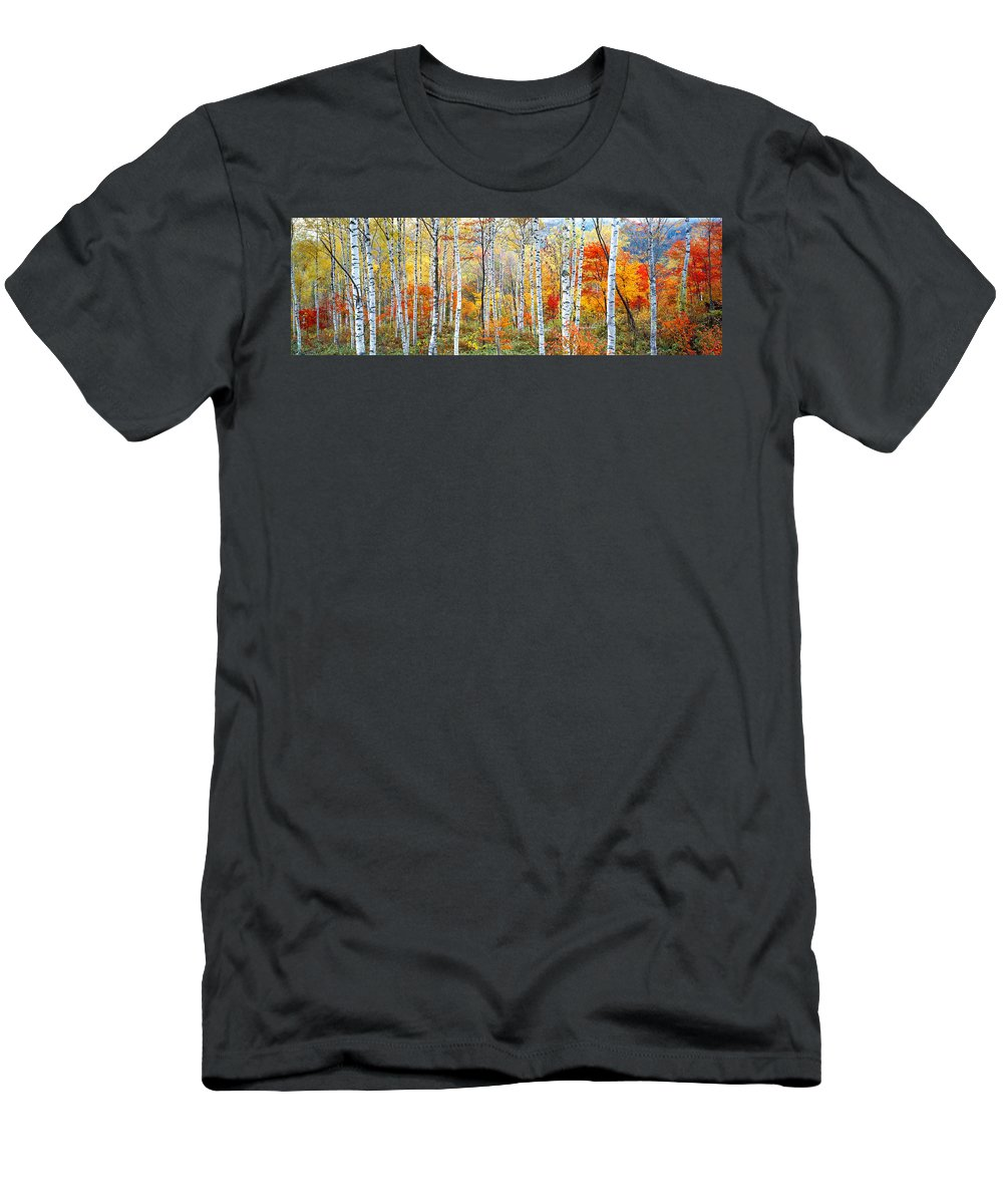 Photography Men's T-Shirt (Athletic Fit) featuring the photograph Fall Trees, Shinhodaka, Gifu, Japan by Panoramic Images