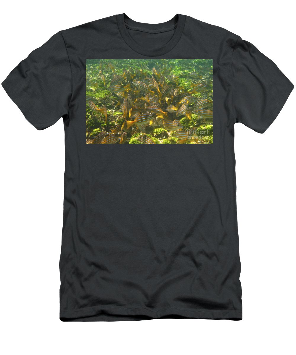 Fish Men's T-Shirt (Athletic Fit) featuring the photograph Feeding Frenzy by Christina Gupfinger