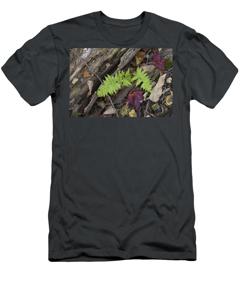 Fern Men's T-Shirt (Athletic Fit) featuring the photograph Fern And Maple Leaves Maine Img 6182 by Greg Kluempers