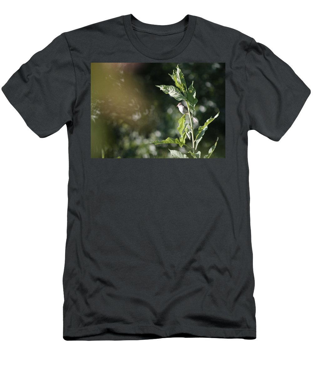 Field Sparrow Men's T-Shirt (Athletic Fit) featuring the photograph Field Sparrow by Melinda Fawver