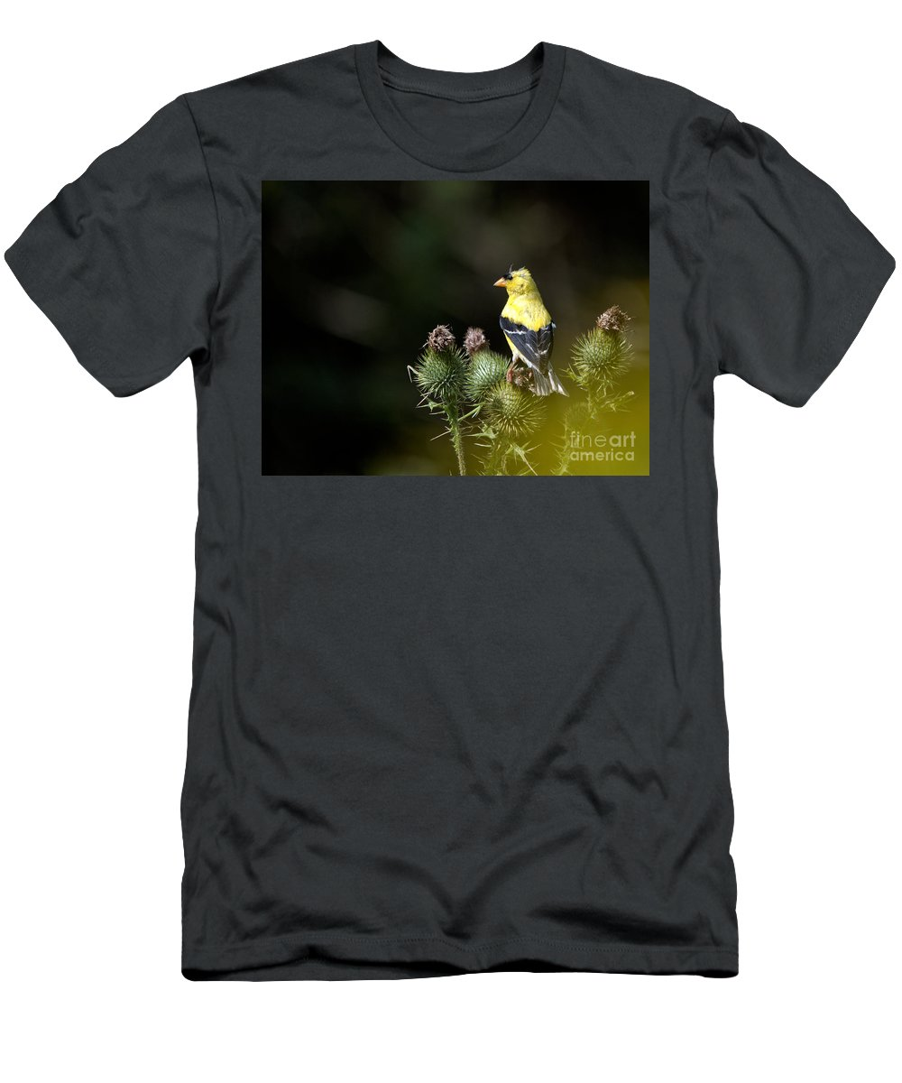 Finch Men's T-Shirt (Athletic Fit) featuring the photograph Finch In The Thistles by Cheryl Baxter