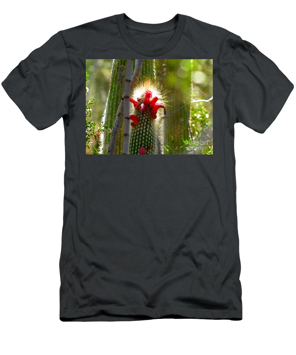 Cactus Men's T-Shirt (Athletic Fit) featuring the photograph Firecracker Cacti by Marilyn Smith