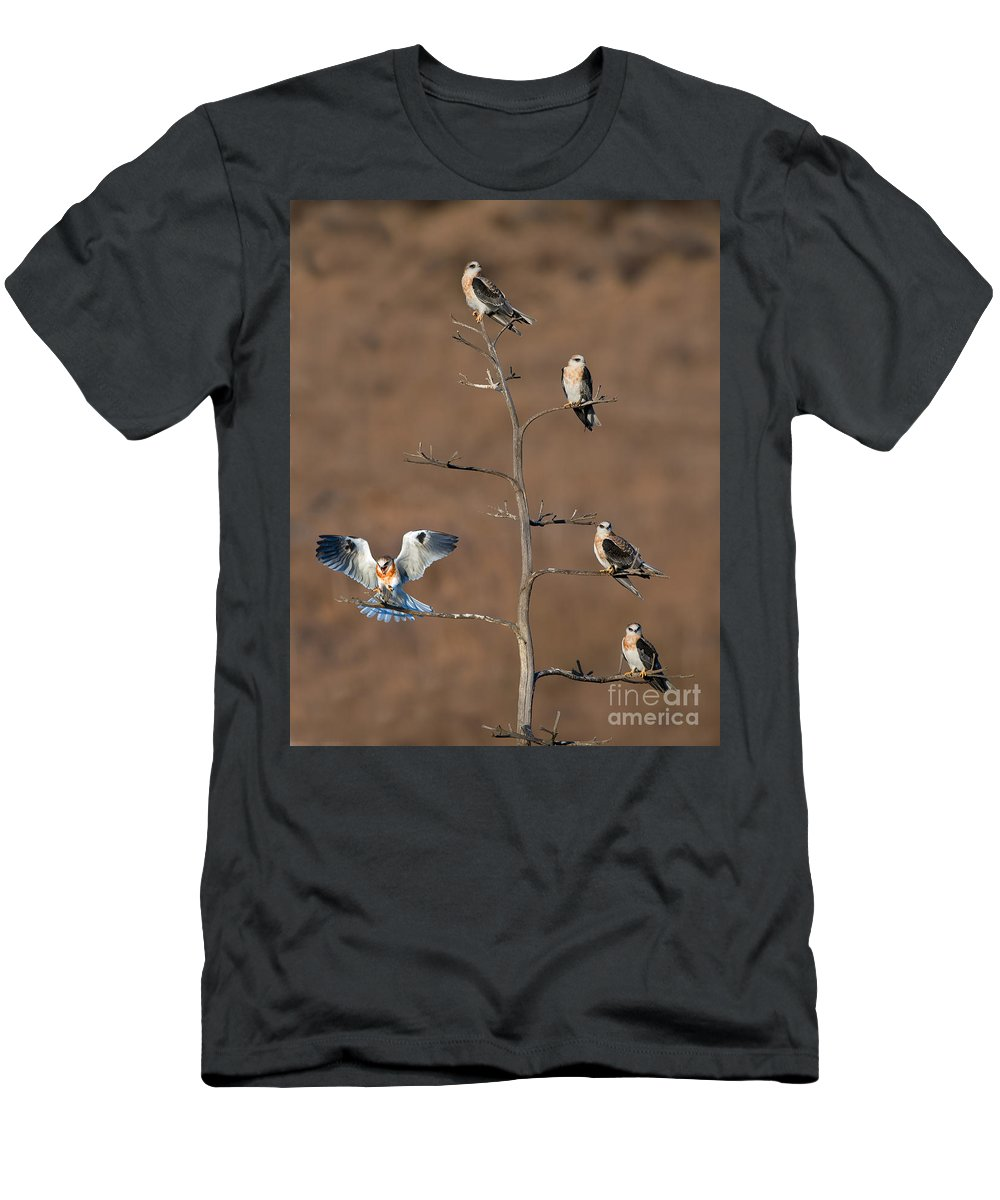 Animal Men's T-Shirt (Athletic Fit) featuring the photograph Five White-tailed Kite Siblings by Anthony Mercieca