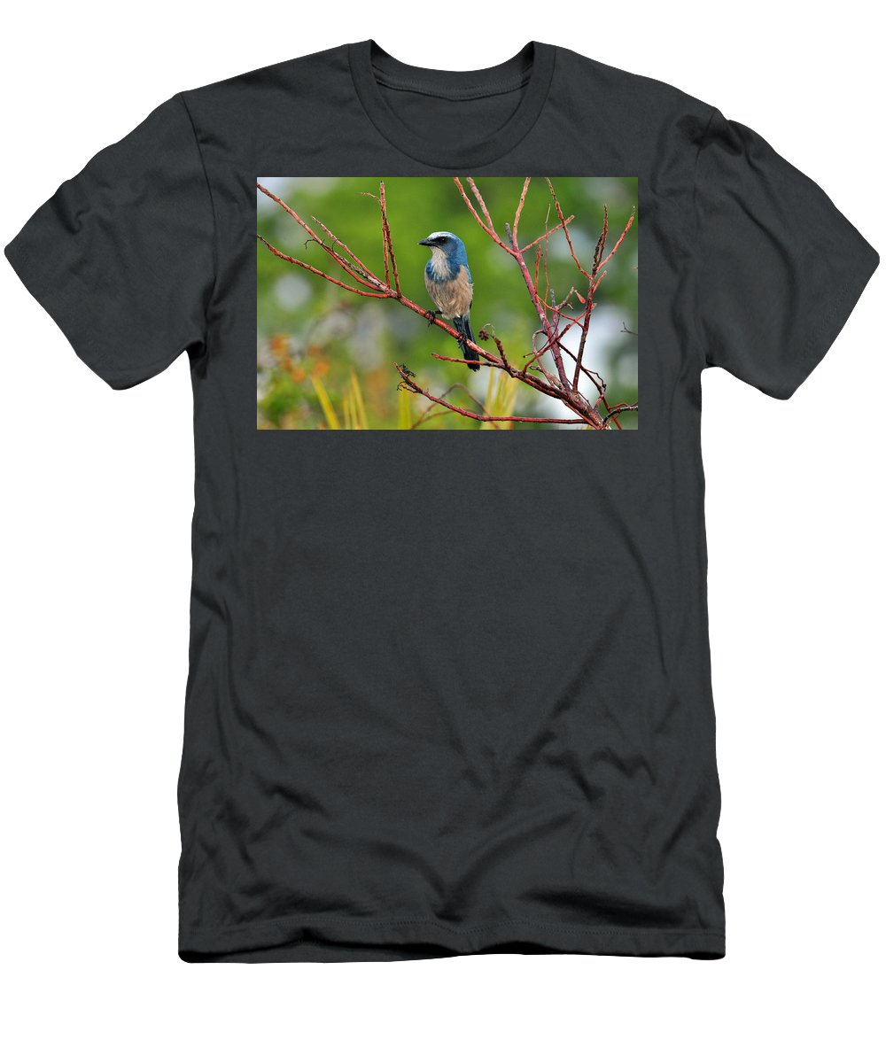 Florida Scrub Jay Men's T-Shirt (Athletic Fit) featuring the photograph Florida Scrubjay by Davids Digits