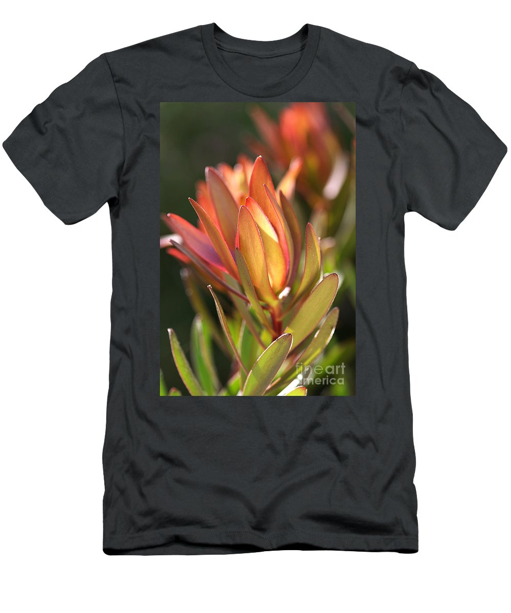 Flower Men's T-Shirt (Athletic Fit) featuring the photograph Flower-protea-bloom by Joy Watson