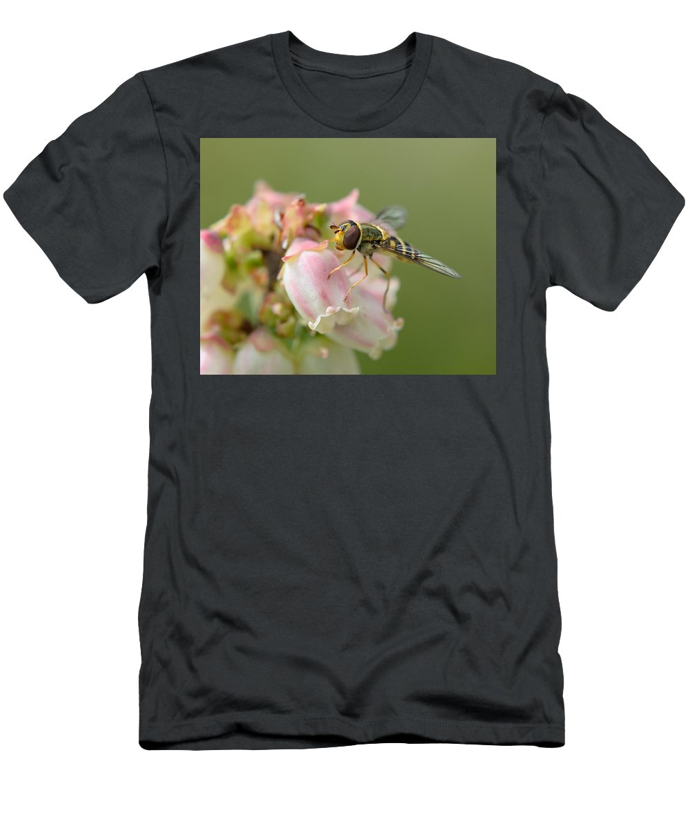Flowerfly Men's T-Shirt (Athletic Fit) featuring the photograph Flowerfly On Blueberry Blossom by Susan Capuano