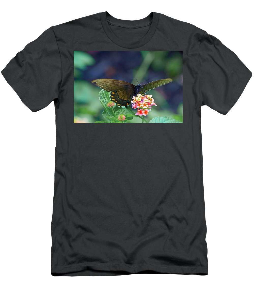 Butterfly Men's T-Shirt (Athletic Fit) featuring the photograph Fly By by John Dauer