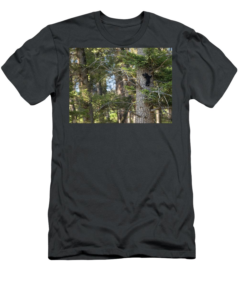 Black Bear Men's T-Shirt (Athletic Fit) featuring the photograph Forest Black Bear Cub by Max Waugh