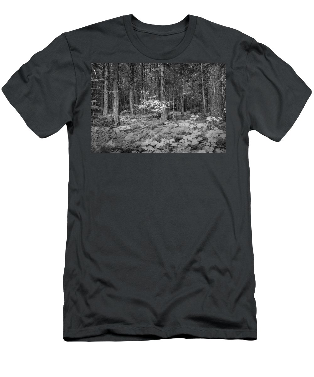 Glacier National Park Men's T-Shirt (Athletic Fit) featuring the photograph Forest Floor Glacier National Park Bw by Rich Franco
