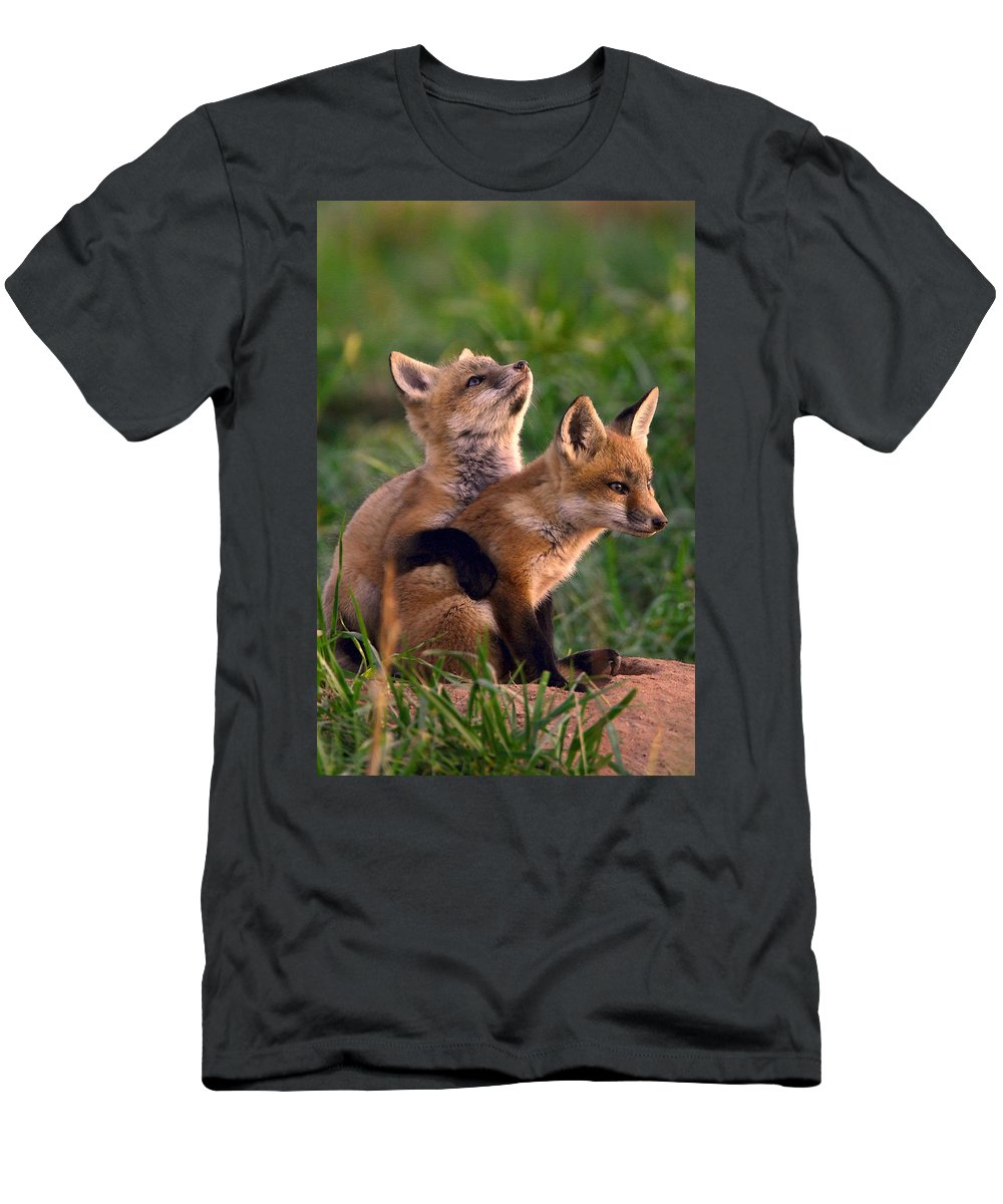 Fox Men's T-Shirt (Athletic Fit) featuring the photograph Fox Cub Buddies by William Jobes