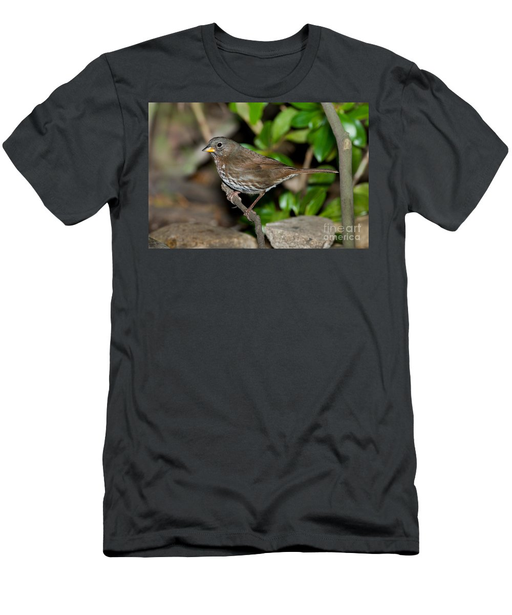 Fox Sparrow Men's T-Shirt (Athletic Fit) featuring the photograph Fox Sparrow by Anthony Mercieca