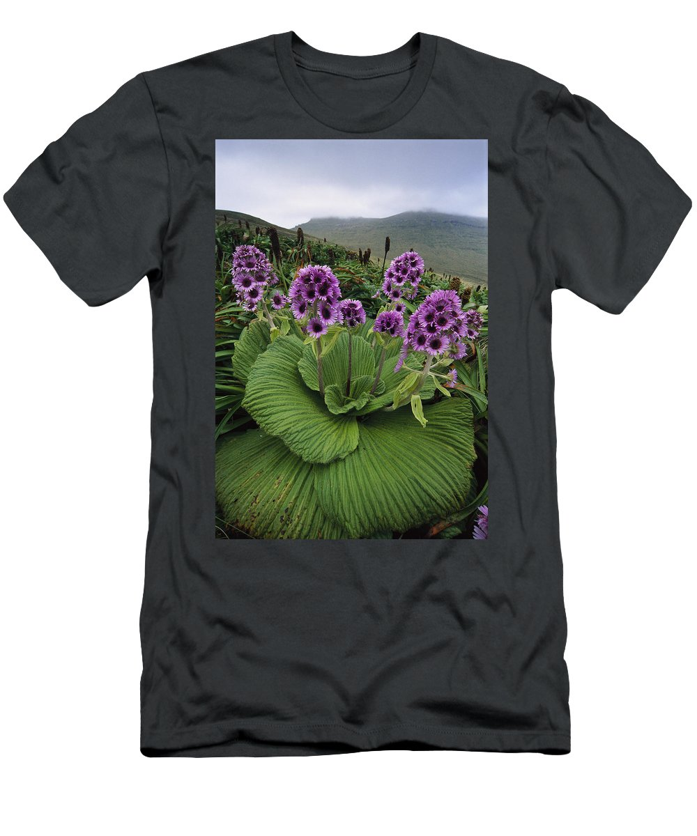 Feb0514 Men's T-Shirt (Athletic Fit) featuring the photograph Giant Daisy In Full Bloom Campbell by Tui De Roy