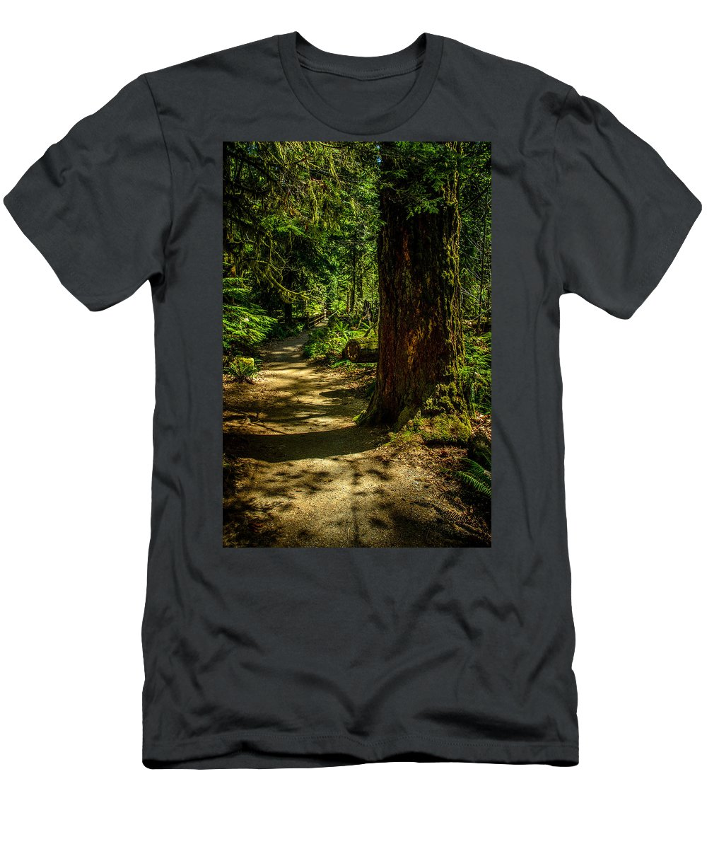 Old Growth Forest Men's T-Shirt (Athletic Fit) featuring the photograph Giant Douglas Fir Trees Collection 2 by Roxy Hurtubise
