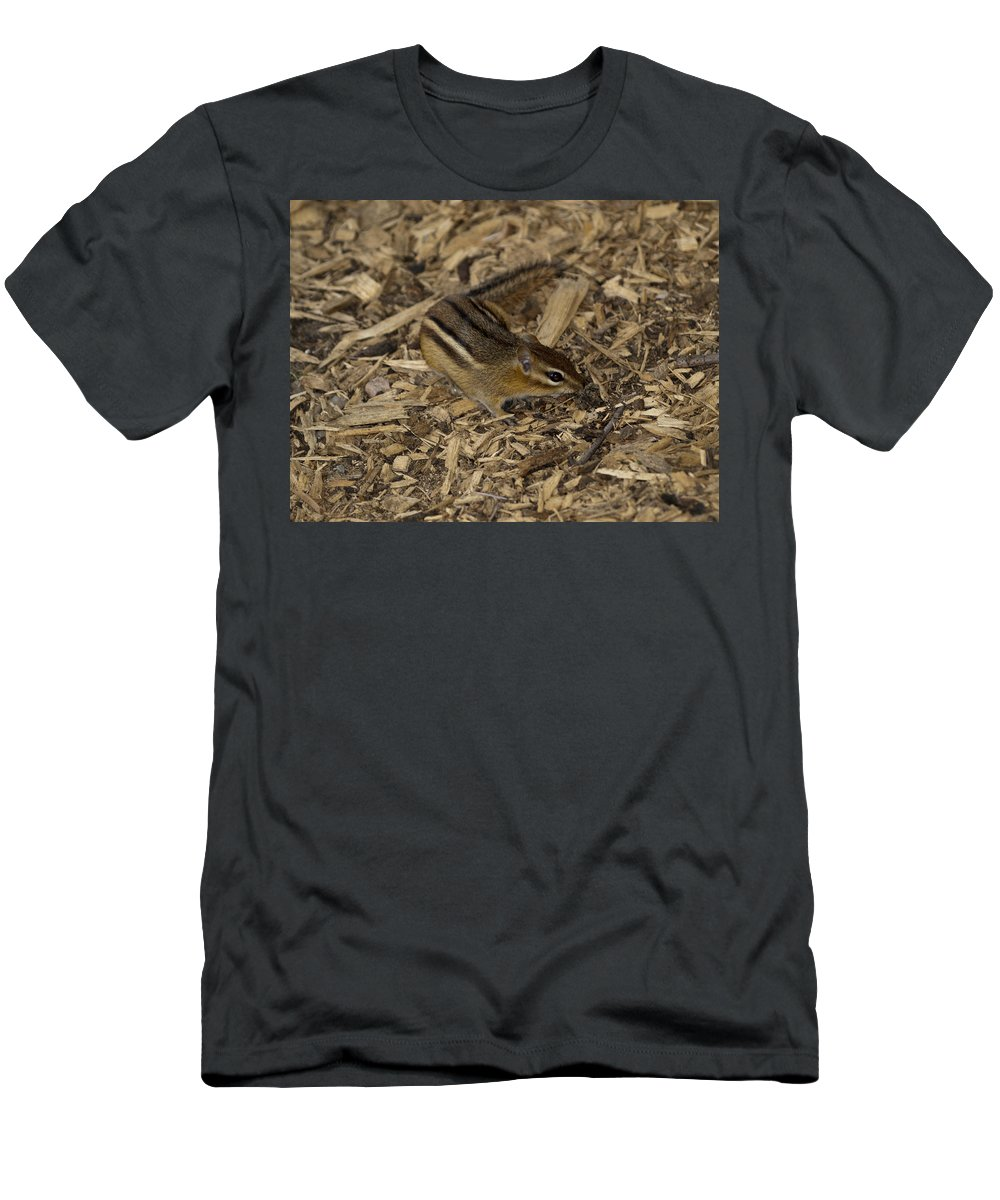 Brown Chipmunk Striped Animal Wild Nature  Men's T-Shirt (Athletic Fit) featuring the photograph Give Me Food by Tara Lynn