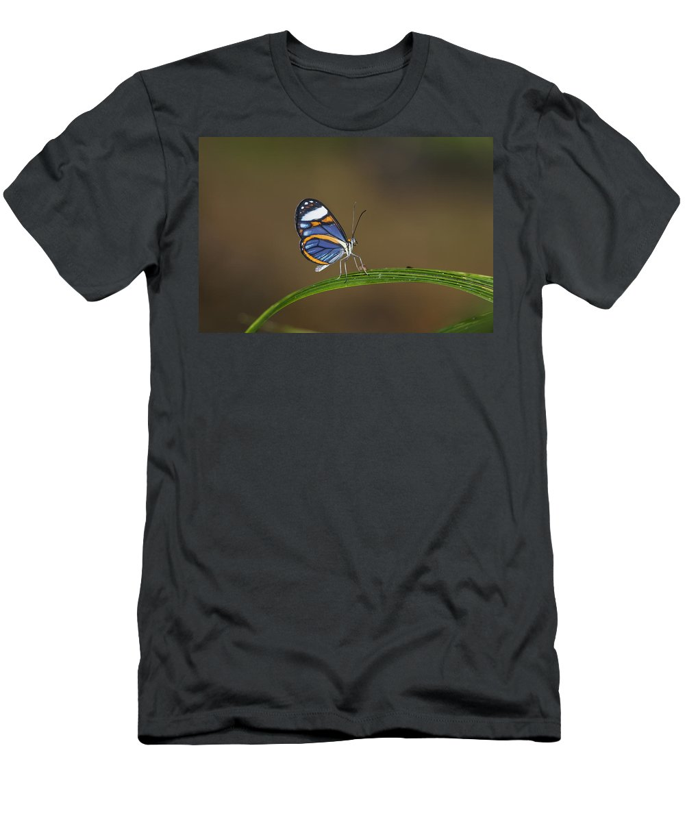 Feb0514 Men's T-Shirt (Athletic Fit) featuring the photograph Glasswing On Leaf Costa Rica by Konrad Wothe