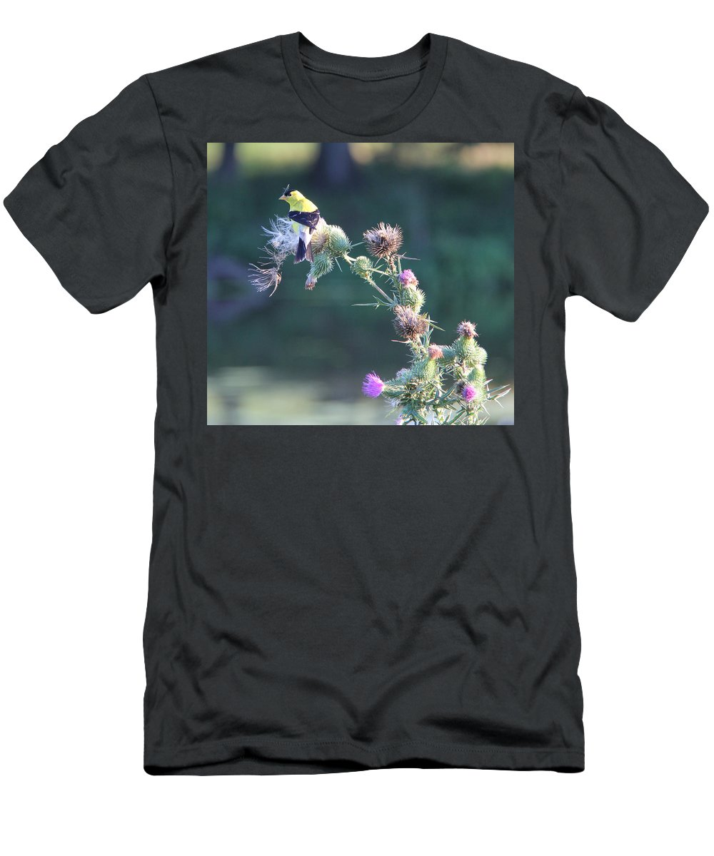 Gold Finch Men's T-Shirt (Athletic Fit) featuring the photograph Gold Finch by Adrienne Franklin