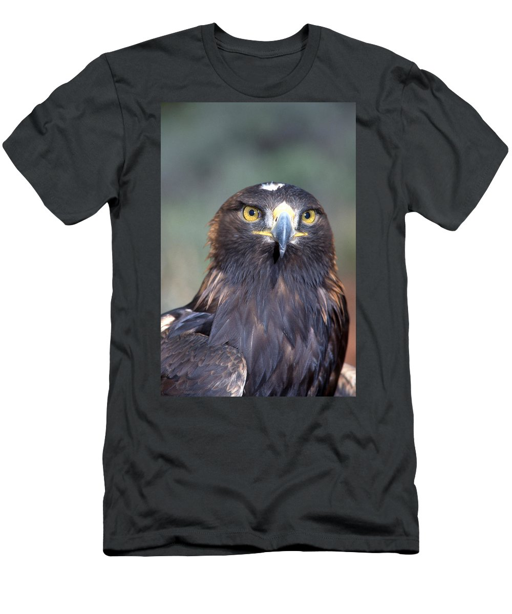 Eagle Men's T-Shirt (Athletic Fit) featuring the photograph Golden Eagle Lookin' At You by Larry Allan