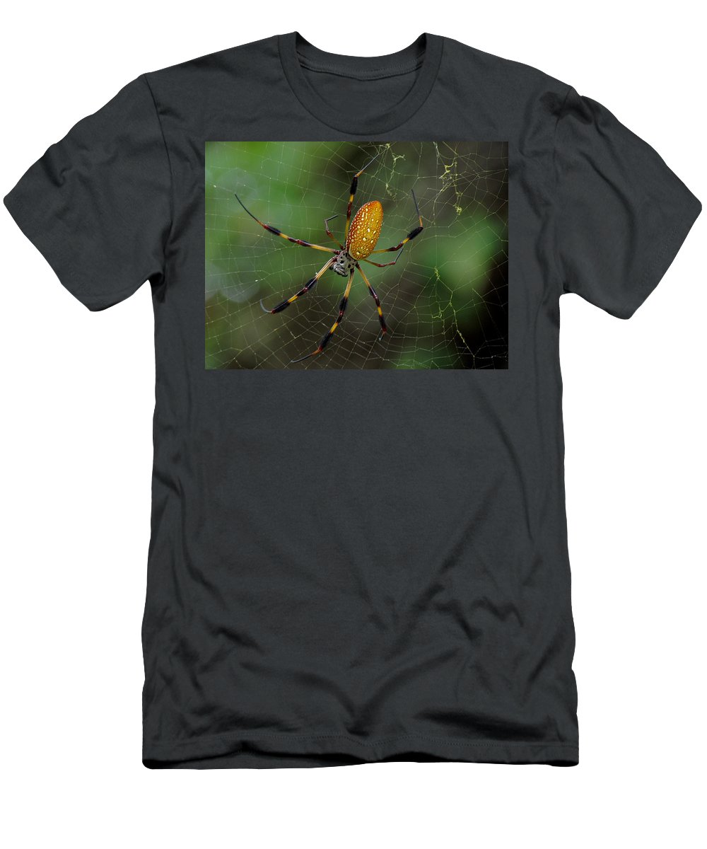 Golden Silk Spider Men's T-Shirt (Athletic Fit) featuring the photograph Golden Silk Spider 10 by J M Farris Photography