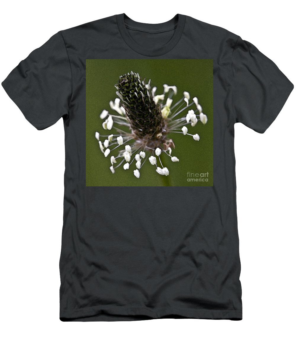 Heiko Men's T-Shirt (Athletic Fit) featuring the photograph Grass Bloom by Heiko Koehrer-Wagner