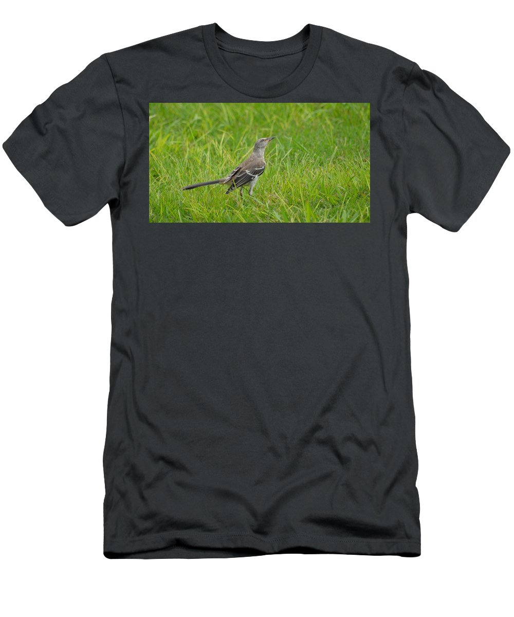 Gray-eyed Catbird Ii Men's T-Shirt (Athletic Fit) featuring the photograph Gray-eyed Catbird II by Maria Urso