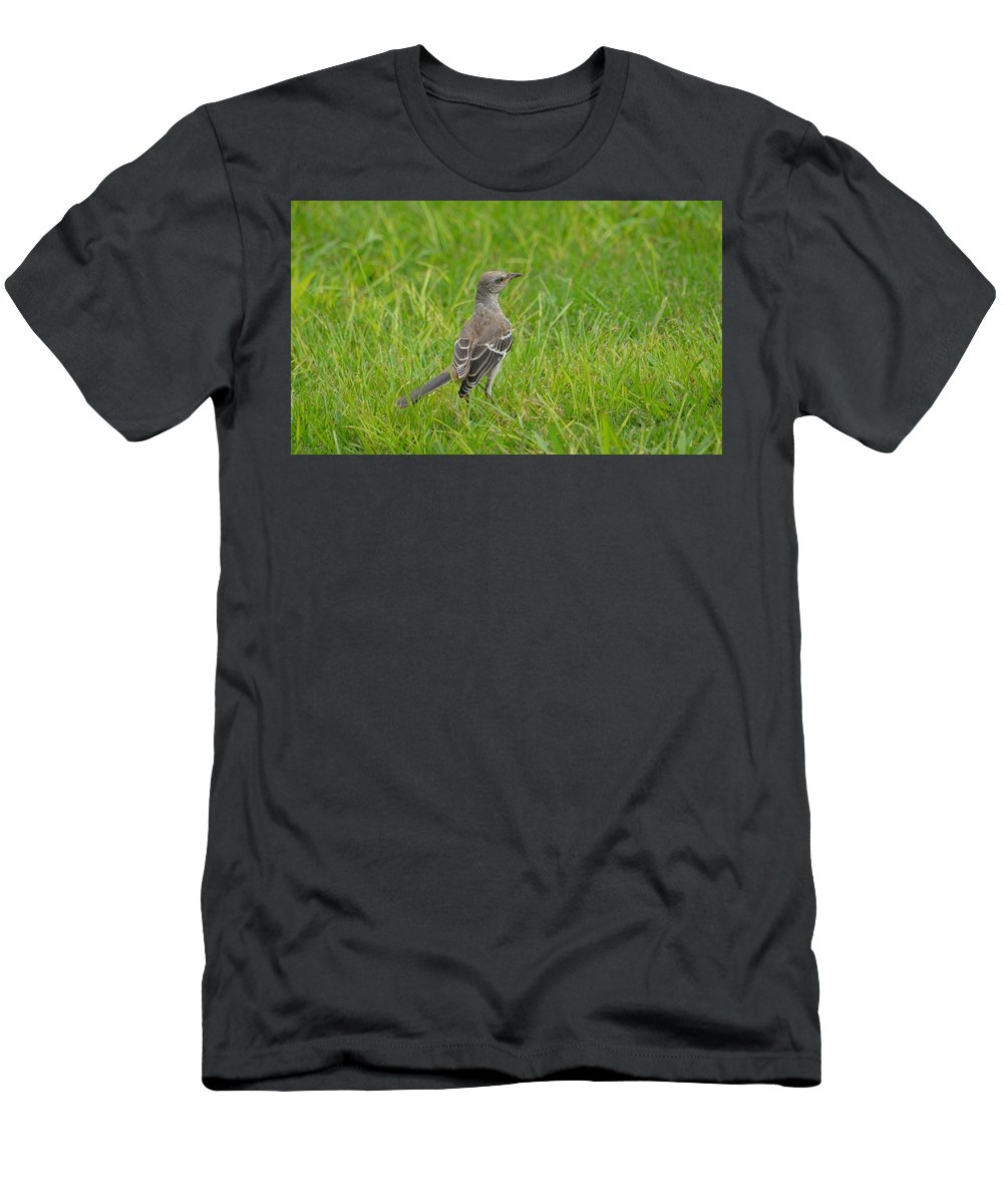 Gray-eyed Catbird Men's T-Shirt (Athletic Fit) featuring the photograph Gray-eyed Catbird by Maria Urso