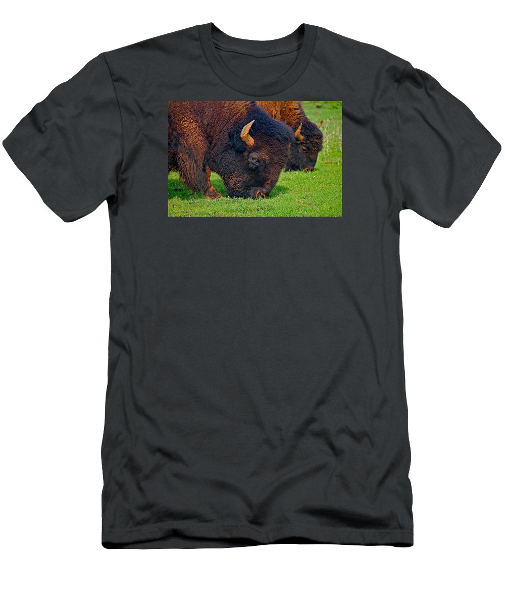 Buffalo Men's T-Shirt (Athletic Fit) featuring the photograph Grazing Buffaloes by Denise Mazzocco