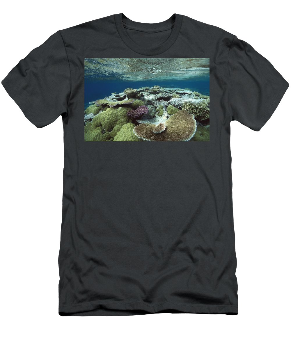 Feb0514 Men's T-Shirt (Athletic Fit) featuring the photograph Great Barrier Reef Near Port Douglas by Flip Nicklin