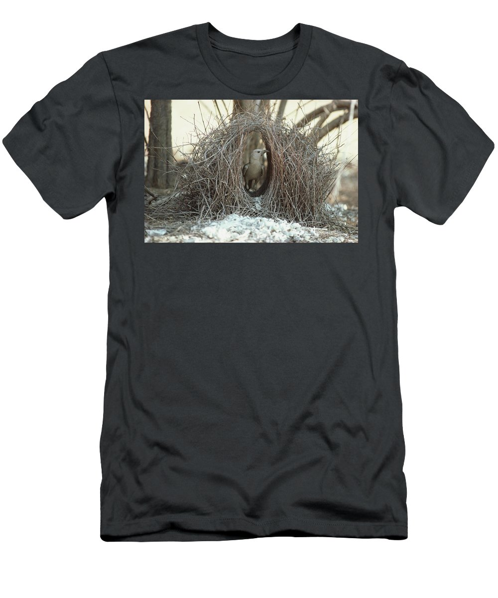 Feb0514 Men's T-Shirt (Athletic Fit) featuring the photograph Great Bowerbird Male In Bower Australia by Gerry Ellis