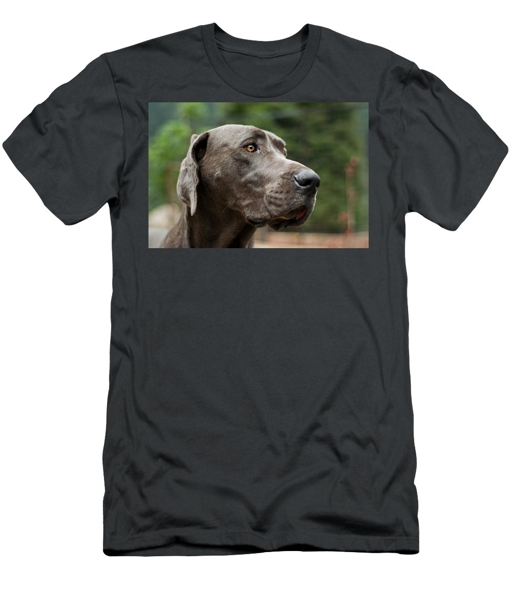 Great Men's T-Shirt (Athletic Fit) featuring the photograph Great Dane by Jess Kraft