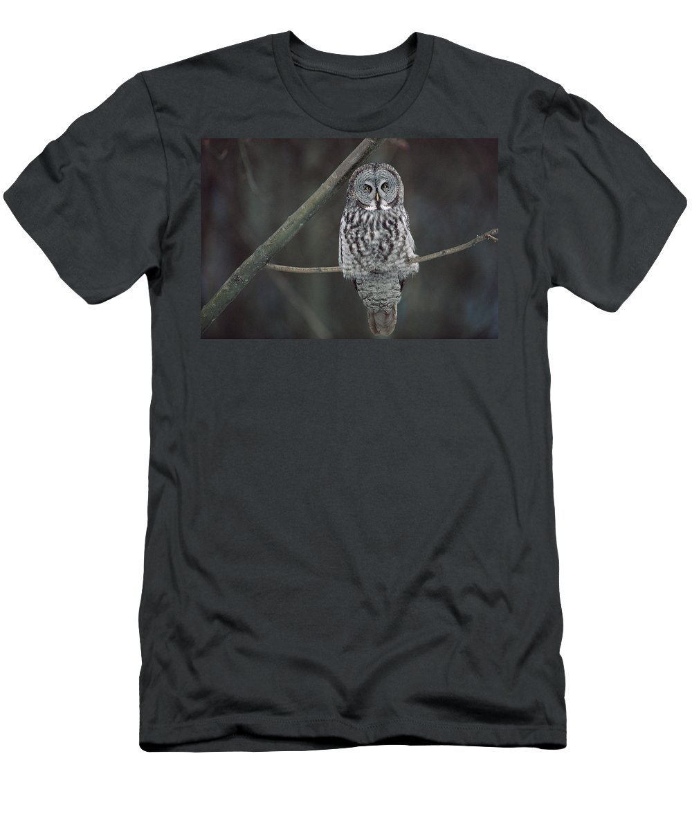 Feb0514 Men's T-Shirt (Athletic Fit) featuring the photograph Great Gray Owl Portrait North America by Gerry Ellis