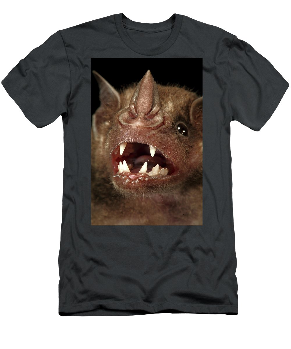 Barro Colorado Island Men's T-Shirt (Athletic Fit) featuring the photograph Greater Spear-nosed Bat by Christian Ziegler