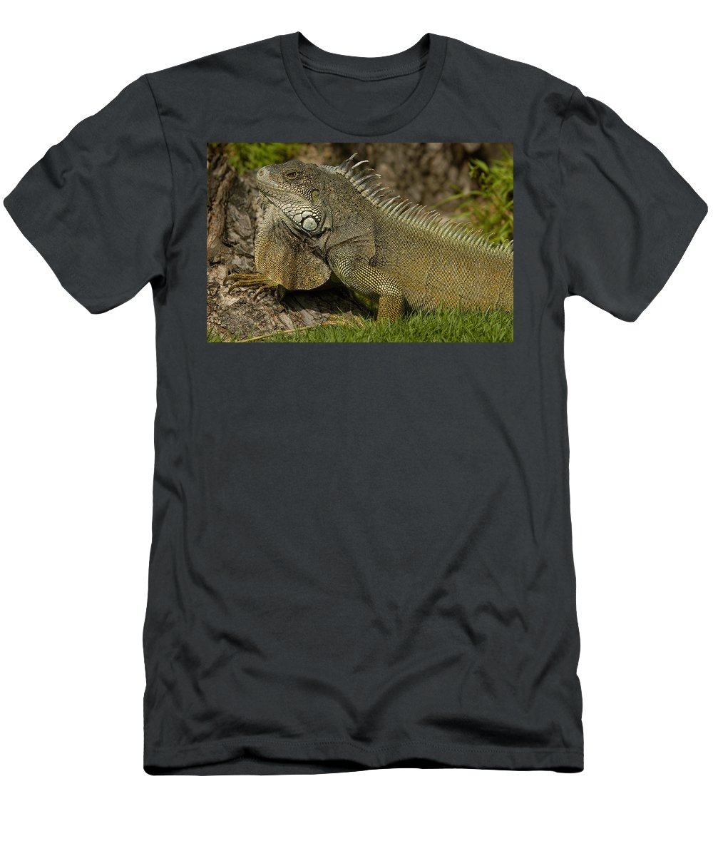 Feb0514 Men's T-Shirt (Athletic Fit) featuring the photograph Green Iguana Guayaquil Ecuador by Pete Oxford
