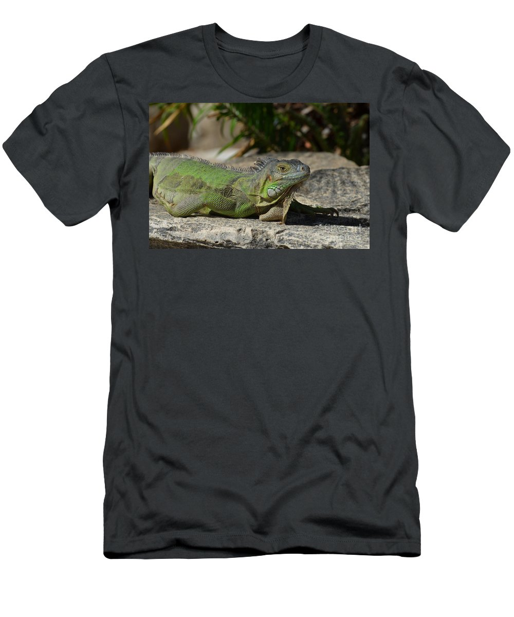 California Lighthouse Men's T-Shirt (Athletic Fit) featuring the photograph Green Iguana Lizard by DejaVu Designs