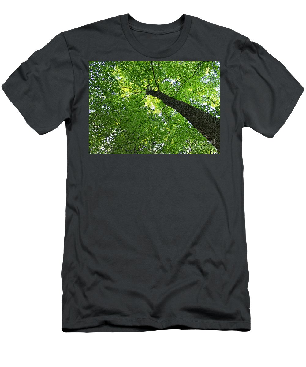Tree Men's T-Shirt (Athletic Fit) featuring the photograph Green Maple Canopy by Barbara McMahon