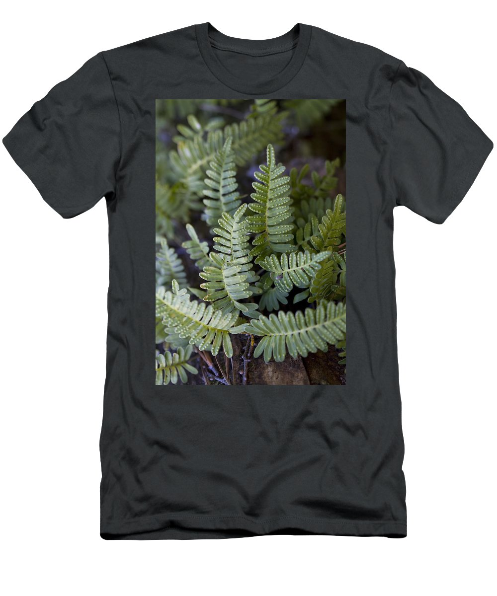 Pleopeltis Polypodioides Men's T-Shirt (Athletic Fit) featuring the photograph Green Resurrection Fern Air Plant by Kathy Clark