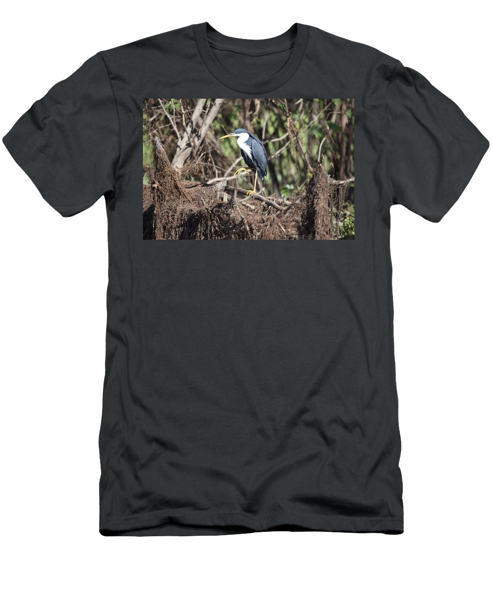 Pied Heron Men's T-Shirt (Athletic Fit) featuring the photograph Grey Suit V2 by Douglas Barnard
