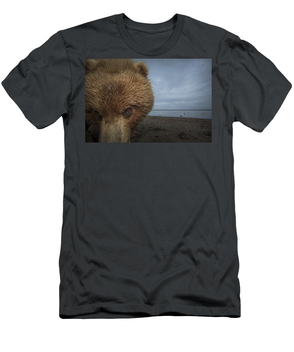 Feb0514 Men's T-Shirt (Athletic Fit) featuring the photograph Grizzly Bear In Tidal Flats Alaska by Ingo Arndt