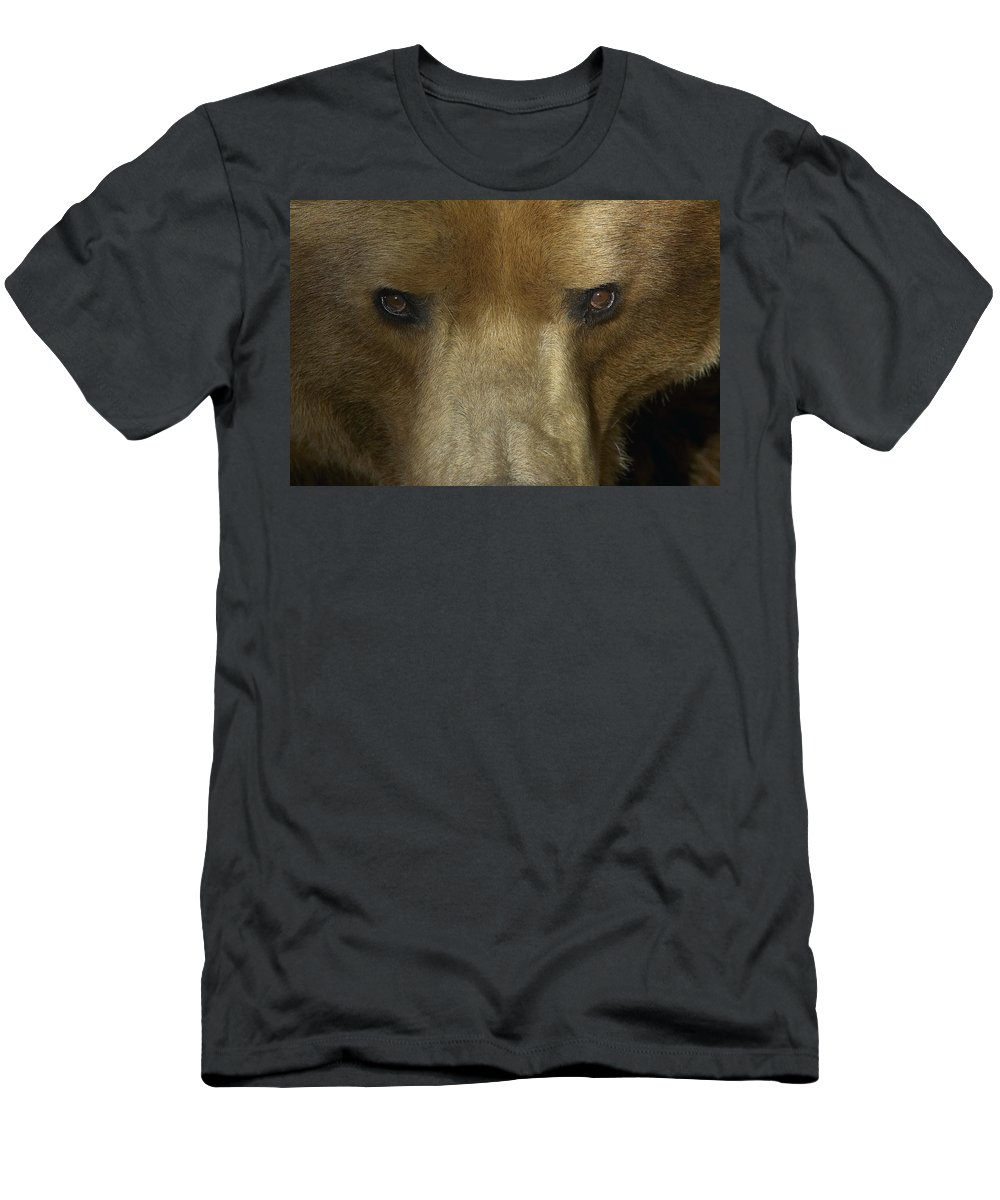 Feb0514 Men's T-Shirt (Athletic Fit) featuring the photograph Grizzly Bear Portrait by San Diego Zoo