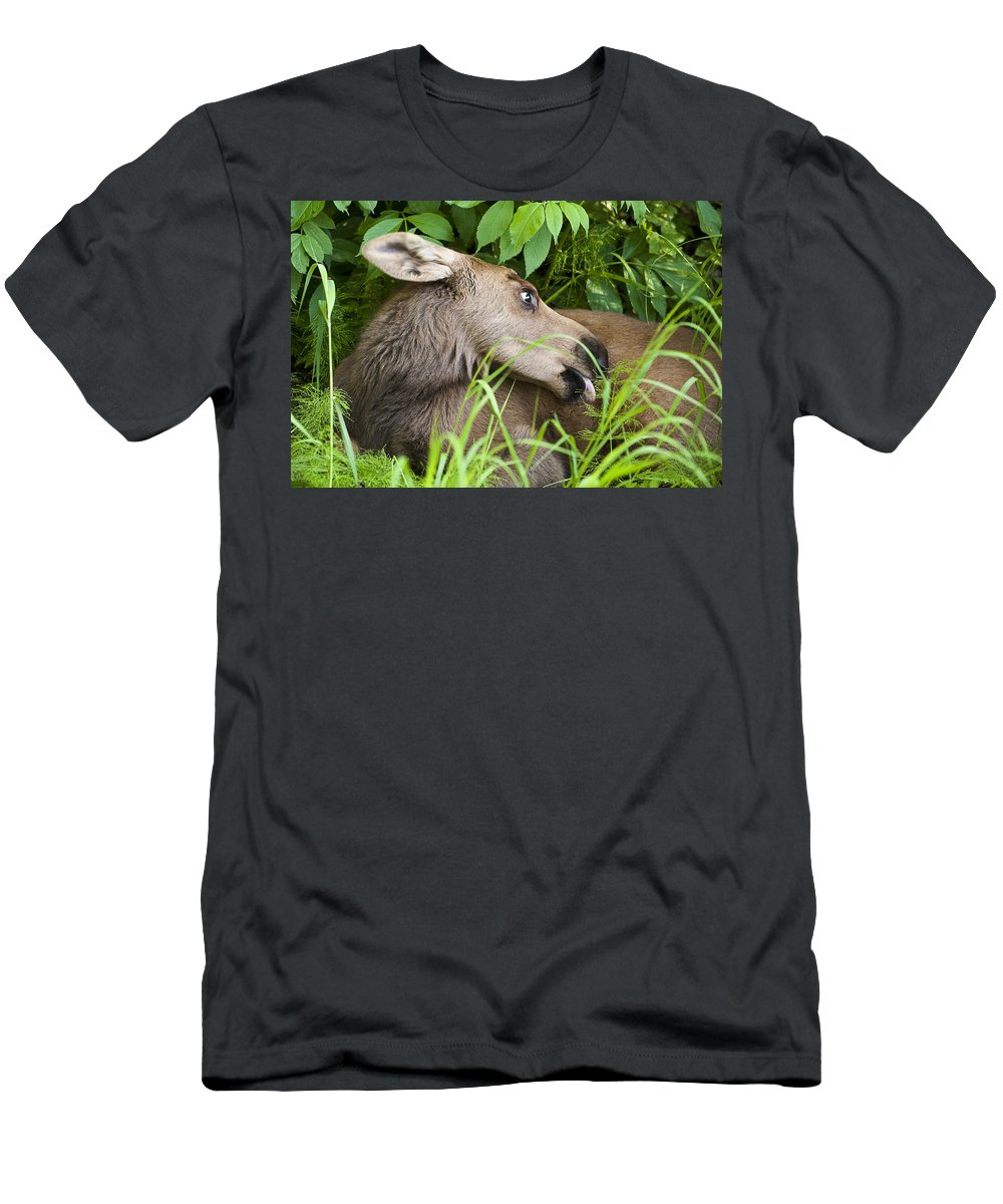 Moose Men's T-Shirt (Athletic Fit) featuring the photograph Grooming by Ted Raynor