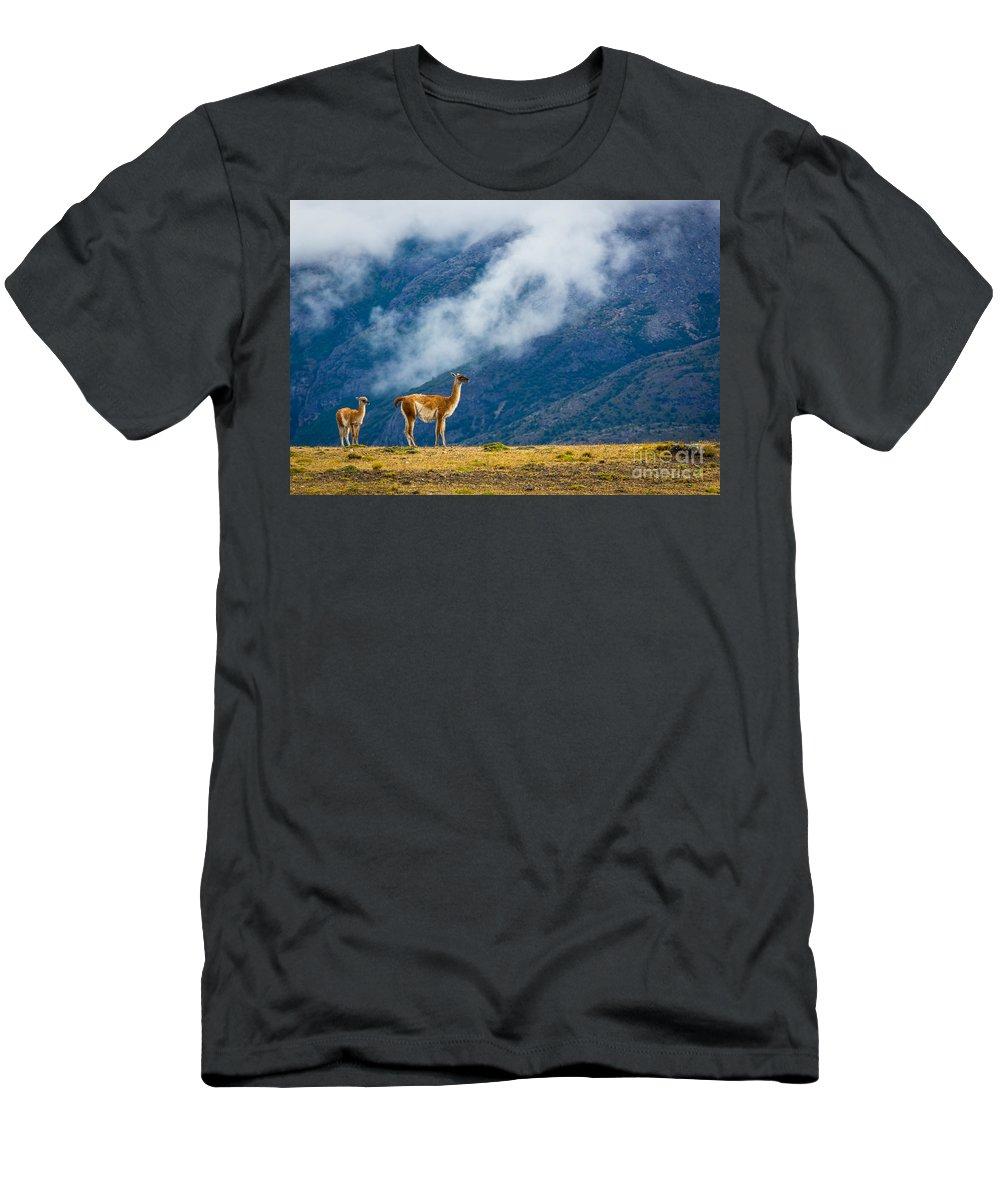 Guanaco T-Shirts