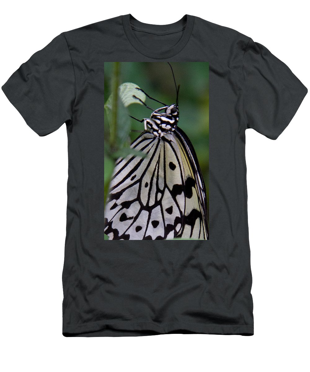 Butterfly Men's T-Shirt (Athletic Fit) featuring the photograph Hanging On by Natalie Rotman Cote