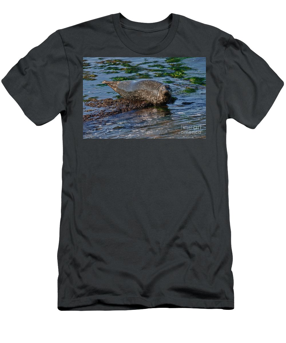 Aquatic Men's T-Shirt (Athletic Fit) featuring the photograph Harbor Seal At Low Tide by Anthony Mercieca